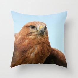 Common Buzzard Throw Pillow