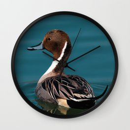 Bird - Northern Pintail Wall Clock