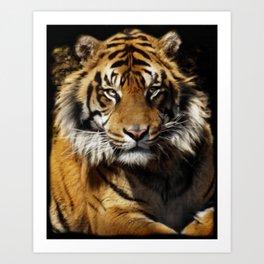 Tiger, Tiger - Big Cat Art Design Art Print