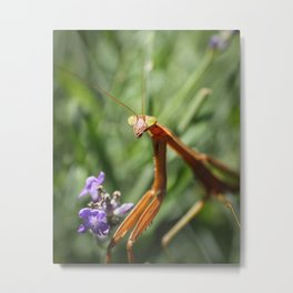 Portrait of a Mantis Metal Print