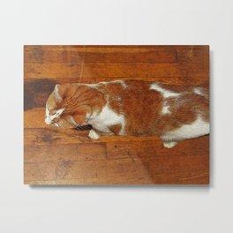 Pennycat Metal Print