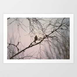 Bird and branches Art Print