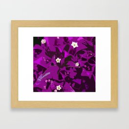 Bouganvilla delight Framed Art Print