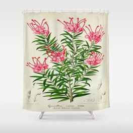 Grevillea Rosea Vintage Botanical Floral Flower Plant Scientific Illustration Shower Curtain