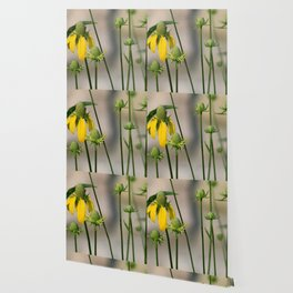 Mexican Hat Wildflowers in Horicon Marsh Wallpaper