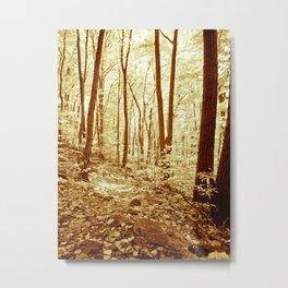Deep in the Woods. Metal Print