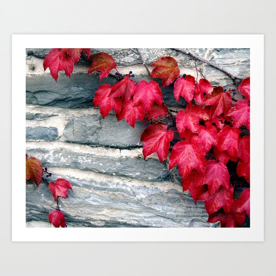 Fall's Ivy in New England Art Print