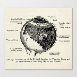 Vintage Anatomy The Human Eyeball Canvas Print