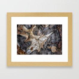 Petrified wood 3264 Framed Art Print