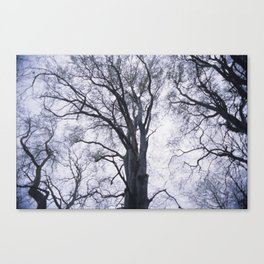 Look up at the Trees Canvas Print