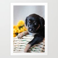 puppies Art Prints featuring Puppies by Photography By SidD