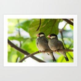 Birds Cuddling Art Print