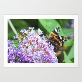 Butterfly XII Art Print