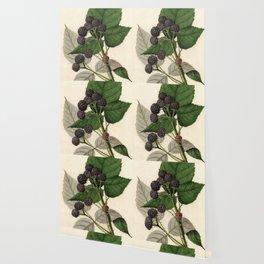 Vintage Painting of Blackberries Wallpaper