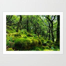 MOSSY ROCK ENGLISH FOREST Art Print