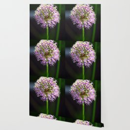 Allium Ball-shaped Onion Flower Wallpaper