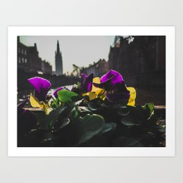 Bruges yellow and purple flowers Art Print