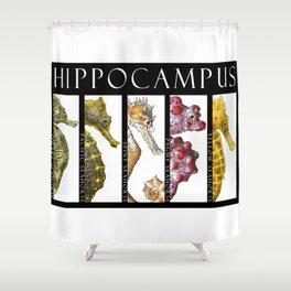 Seahorses - Hippocampus Shower Curtain