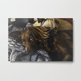 Irish Setter and Pug Relaxing Together Metal Print