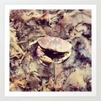 crab Art Prints featuring Crab by Ken Seligson
