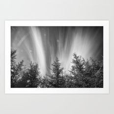 Mountain forest. BW Art Print
