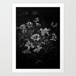 Backyard Flowers In Black And White 23 Art Print