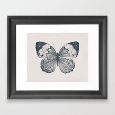 Butterfly 2 Framed Art Print