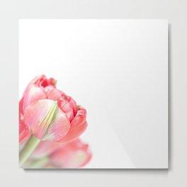 Peony Tulip... (2) Metal Print