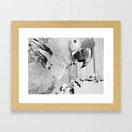 Parrots, birds, sanctuary, winged angels, animals, feathered friend, feathered companion, rescue Framed Art Print