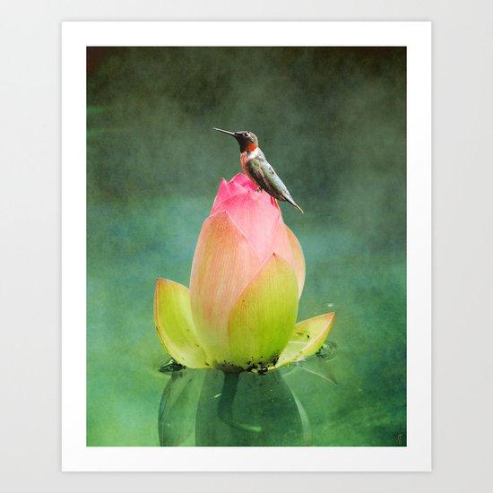Hummingbird and the Lotus Art Print