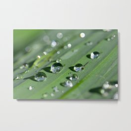 Water Slide Metal Print