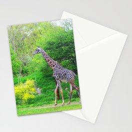Stroll Stationery Cards