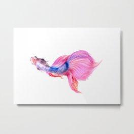 Fish Art Print Metal Print