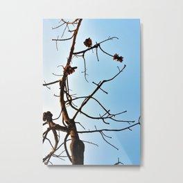 Burnt Banksia Metal Print