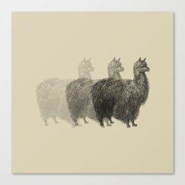 ANDY, THE LLAMA Canvas Print