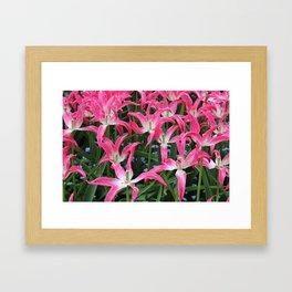 Spent Tulips Framed Art Print