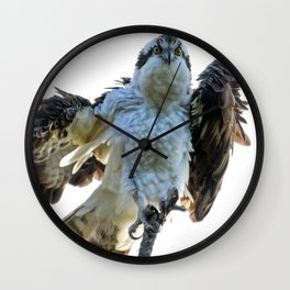 Osprey Posing Wall Clock