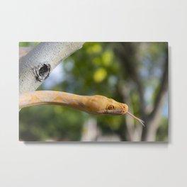 Python in park Metal Print