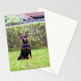 Outdoor portrait of a red miniature pinscher dog sitting on the grass Stationery Cards