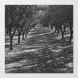 Black & White Almond Orchard Pencil Drawing Photo Canvas Print