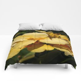 Canna Comforters