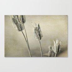 aquilegia seed heads Canvas Print
