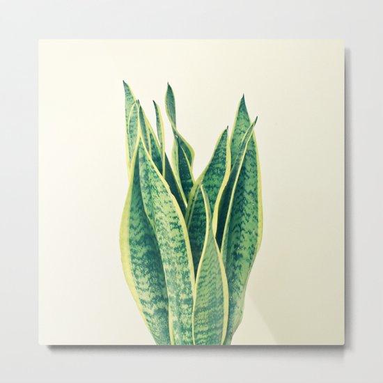 Snake Plant Metal Print