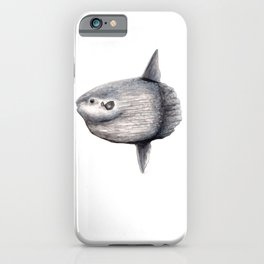 Ocean Sunfish (Mola mola) iPhone Case