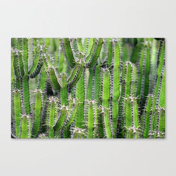 cactus illusion 4 Canvas Print