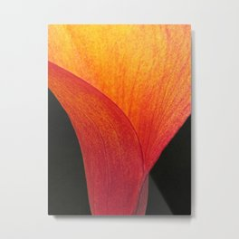 Contemporary Fiery Calla Lily Flower Floral Art A409 Metal Print