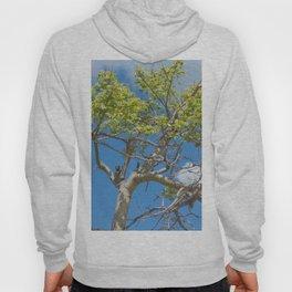 tree in the sky Hoody