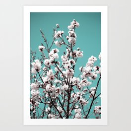 sakura and blue skies Art Print