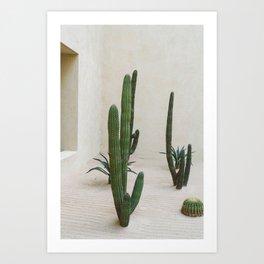 Cabo Cactus VI Art Print