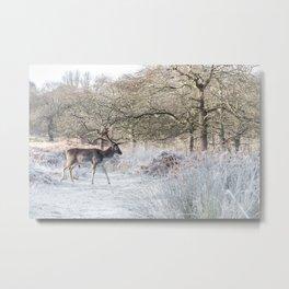 Fallow deer - Richmond Park Metal Print